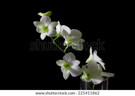 White orchid on a black background - stock photo
