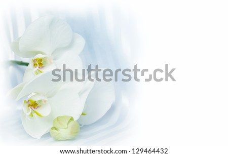 White orchid on silk with copy space