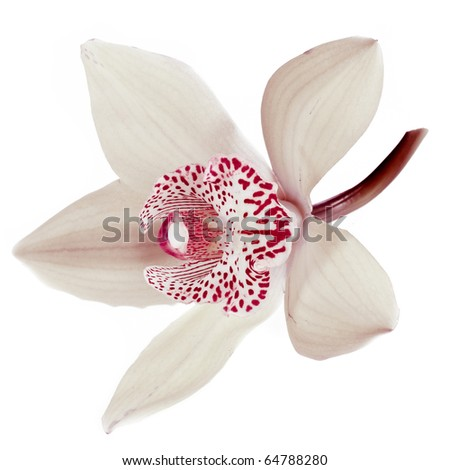 White orchid on white - stock photo