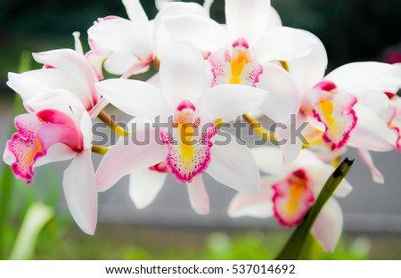 White orchid petals in the garden background