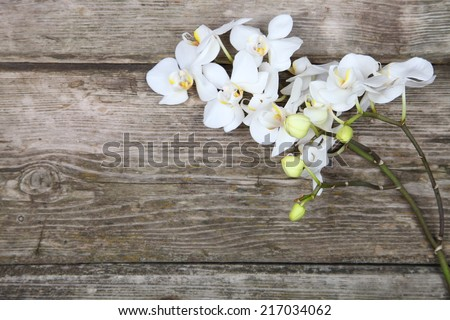 White orchid(Phalaenopsis ) on a wooden background close-up - stock photo