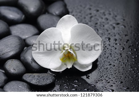 white orchid with stones on wet background - stock photo