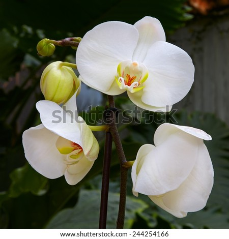 white orchids flower - stock photo