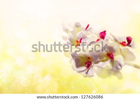 white orchids on a sunny yellow background