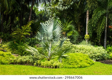 White palm ,Palm special species scarce.
