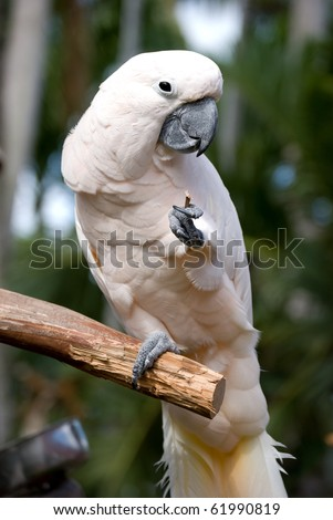 White parrot standing on one leg - stock photo