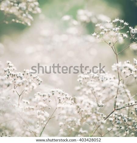 White pastel toned flowers  - stock photo