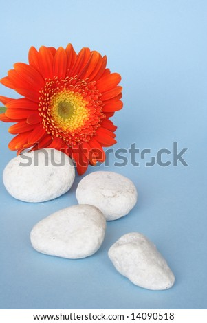 White pebbles and flower in blue background - stock photo