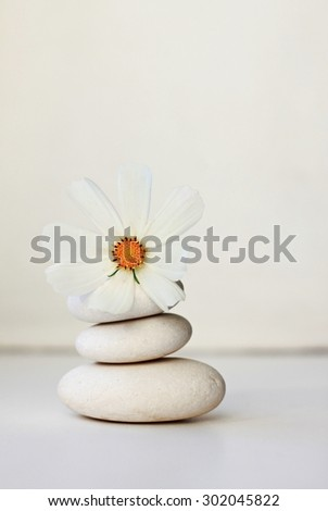 white pebbles cosmos flower stones on white background tranquil beautiful spa setting soft focus vertical  - stock photo