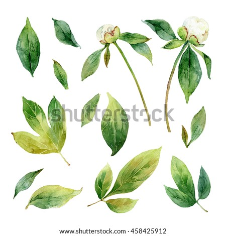 White peonies. Set of floral elements isolated on white background. Watercolor illustration