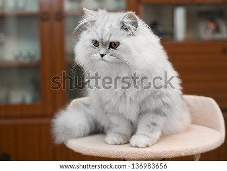 white persian cat on bed  with copy space - stock photo
