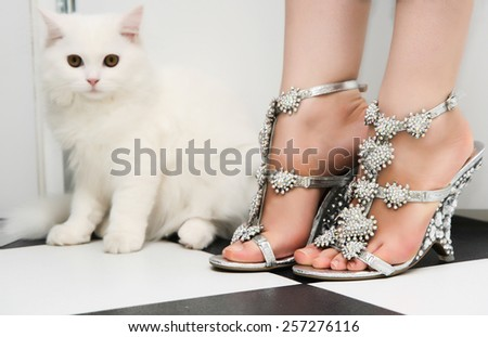 White persian cat standing behind woman in fashion shoes - stock photo