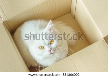 White persian fluffy cat in a present box