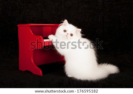 White Persian kitten playing red toy piano against black background - stock photo