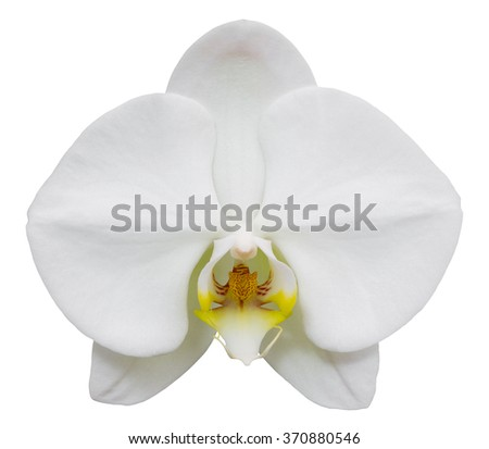 white phalaenopsis orchid flower isolated on white with clipping path - stock photo