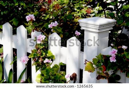 White Picket Fence Detail - stock photo