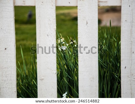 White picket fence with tall grass as the background - stock photo