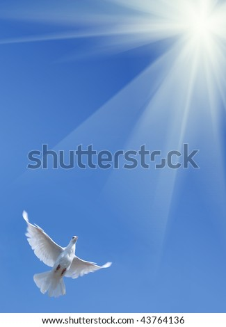 White pigeon against the blue sky - stock photo