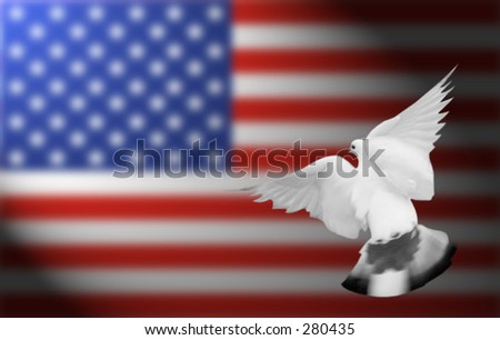 white pigeon flying, blurred american flag in the background - stock photo