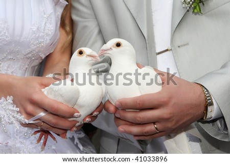white pigeons is in the hands of newlyweds - stock photo
