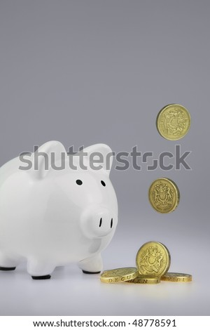 White Piggy bank With British One Pound Coins falling from above and landing infront of the piggy bank, - stock photo