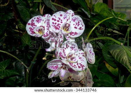White-pink Orchid flowers close-up in the botanical garden. Lifestyle , wellness, romance, and fragrance concept. Selective focus. - stock photo