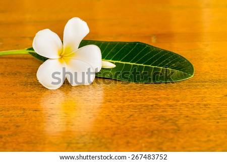 white plumeria flower and leaf on the teak table - stock photo