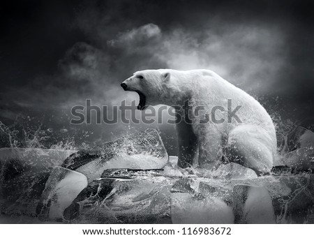 White Polar Bear Hunter on the Ice in water drops.