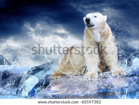 White Polar Bear Hunter on the Ice in water drops. - stock photo