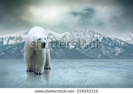 White polar bear on the ice - stock photo