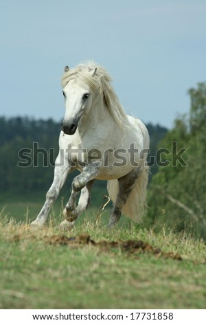 White pony running