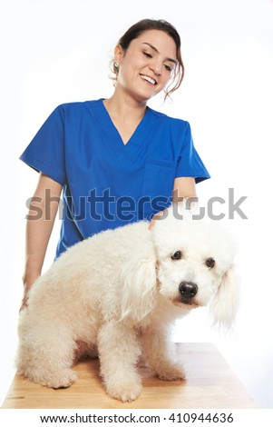 white poodle on check with veterinar on his table