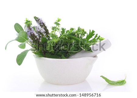 White porcelain mortar and pestle with fresh herbs - stock photo