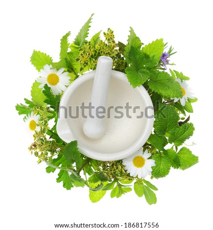 White porcelain mortar and pestle with fresh herbs around it - stock photo