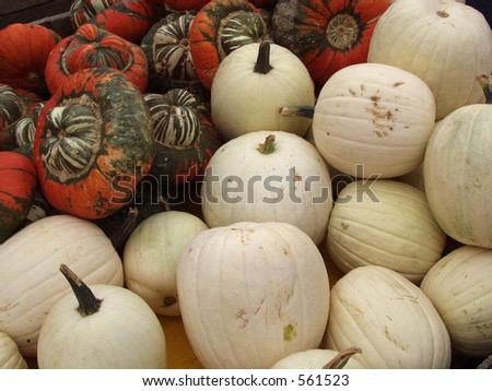 white pumpkins - stock photo