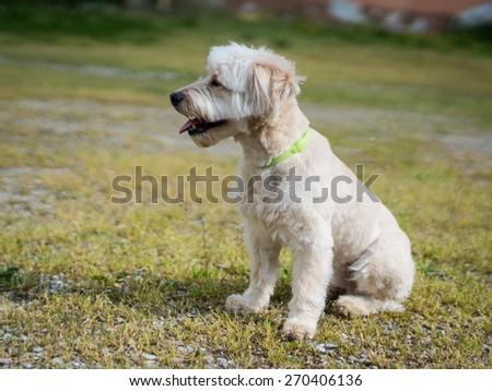 white puppy in the garden - stock photo