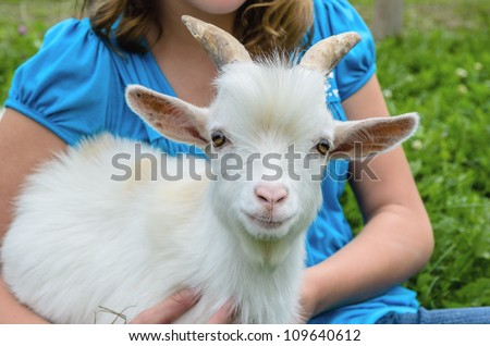 White Pygmy Goat with Owner - stock photo