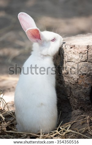 White rabbit be side the log