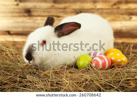White rabbit in hay with painted eggs on brown wooden background