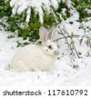 White rabbit lies under a fir - stock photo