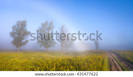 White rainbow and trees on the foggy morning field of grass