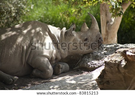 white rhino is relaxing in shade - stock photo