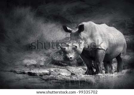 White Rhinoceros (Artistic processing) - stock photo