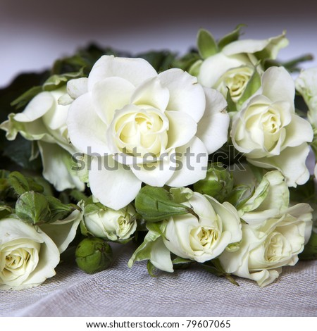 white rose at table