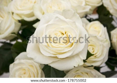 White rose closeup. Background of flowers buds. - stock photo