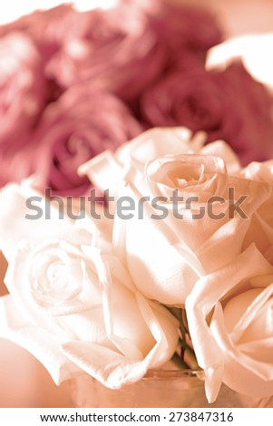 White rose flower and pink rose background - stock photo