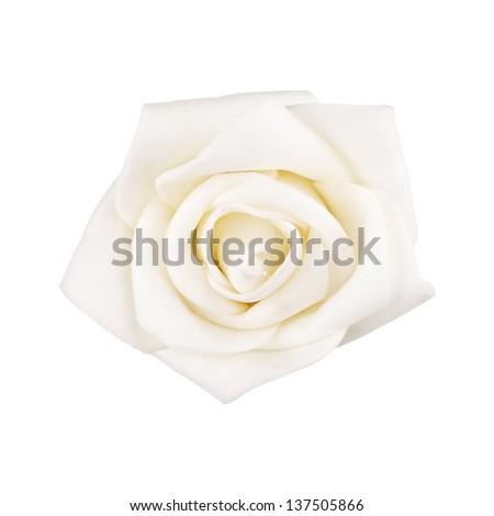 white rose isolated - stock photo