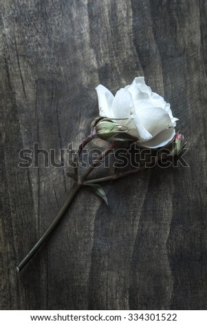 White Rose on a rustic old vintage table, from above - stock photo