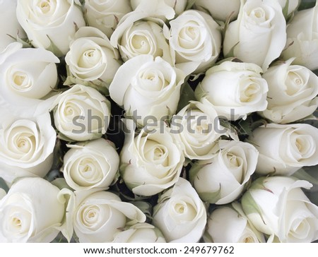 White roses and buds as a background