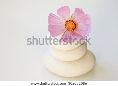 white round pebbles pink summer cosmos flower white empty calm background span balance setting soft focus - stock photo